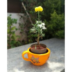 Hand Painted Terracotta Coffee Mug Shape Planter/ Planter Box Paisley Design Planter